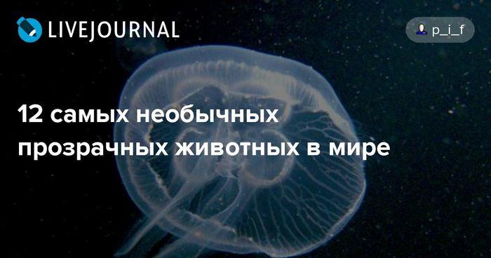 12 Самых необычных прозрачных животных в мире