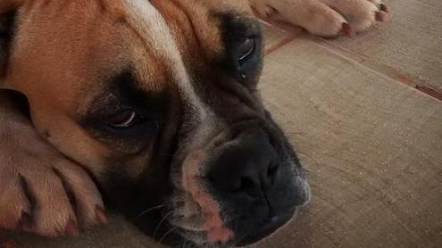 Грипп собак в вопросах и ответах