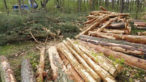 Куда уходит лес украины?