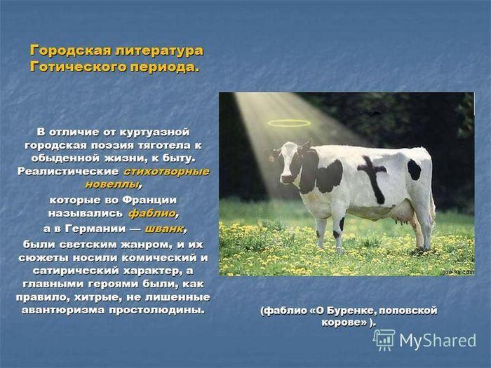 О буренке, поповской корове
