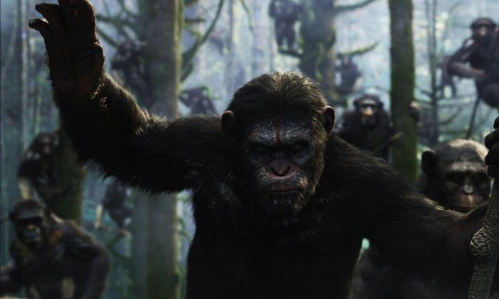 Звездная карта: смотреть онлайн фильм 2014 года будут поклонники роберта паттинсона